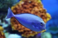 fish-800345_960_720[1].jpg